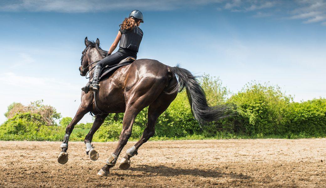 activités centre equestre